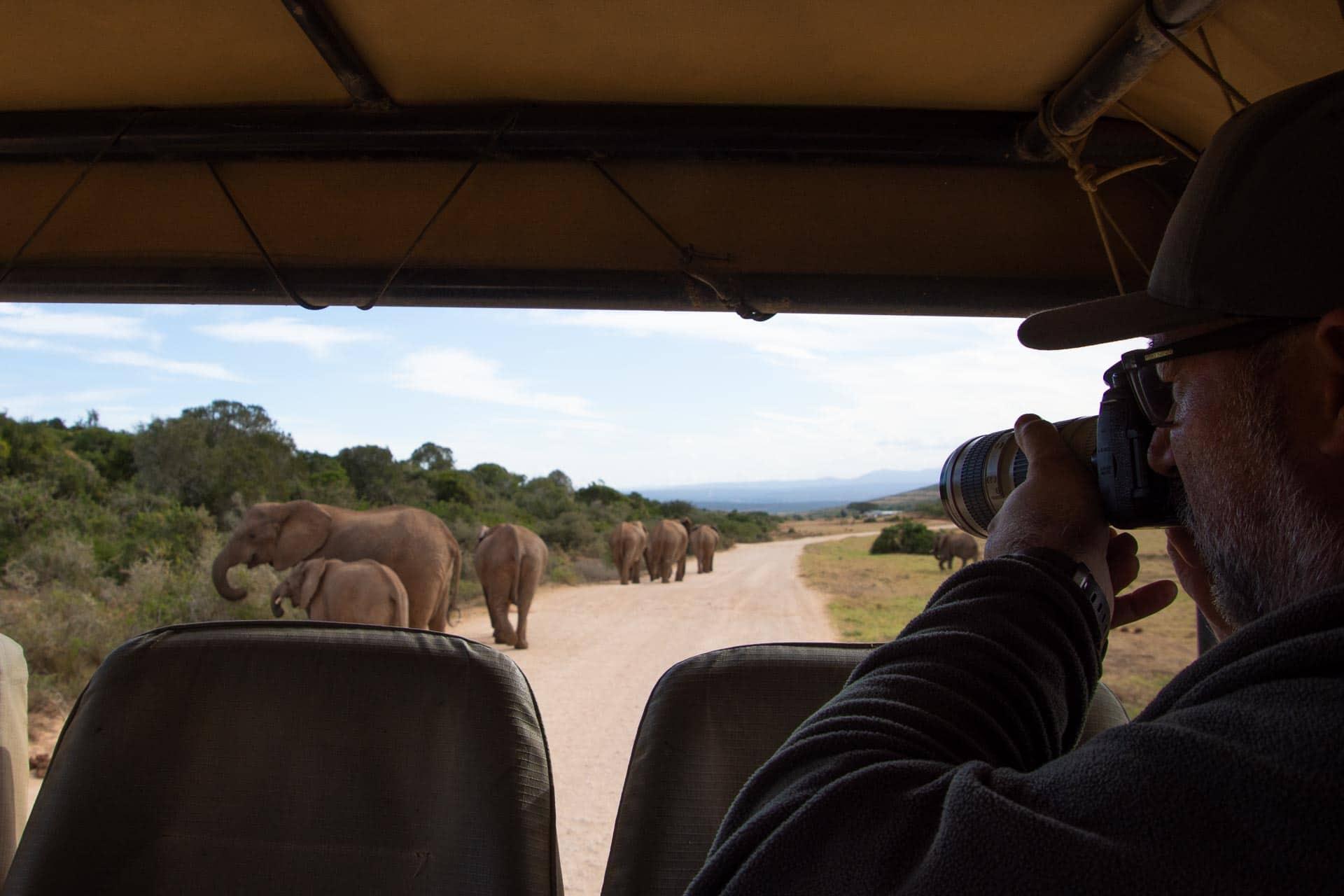 Addo-Elephant-Suedafrika-Globetrotter-Select-8