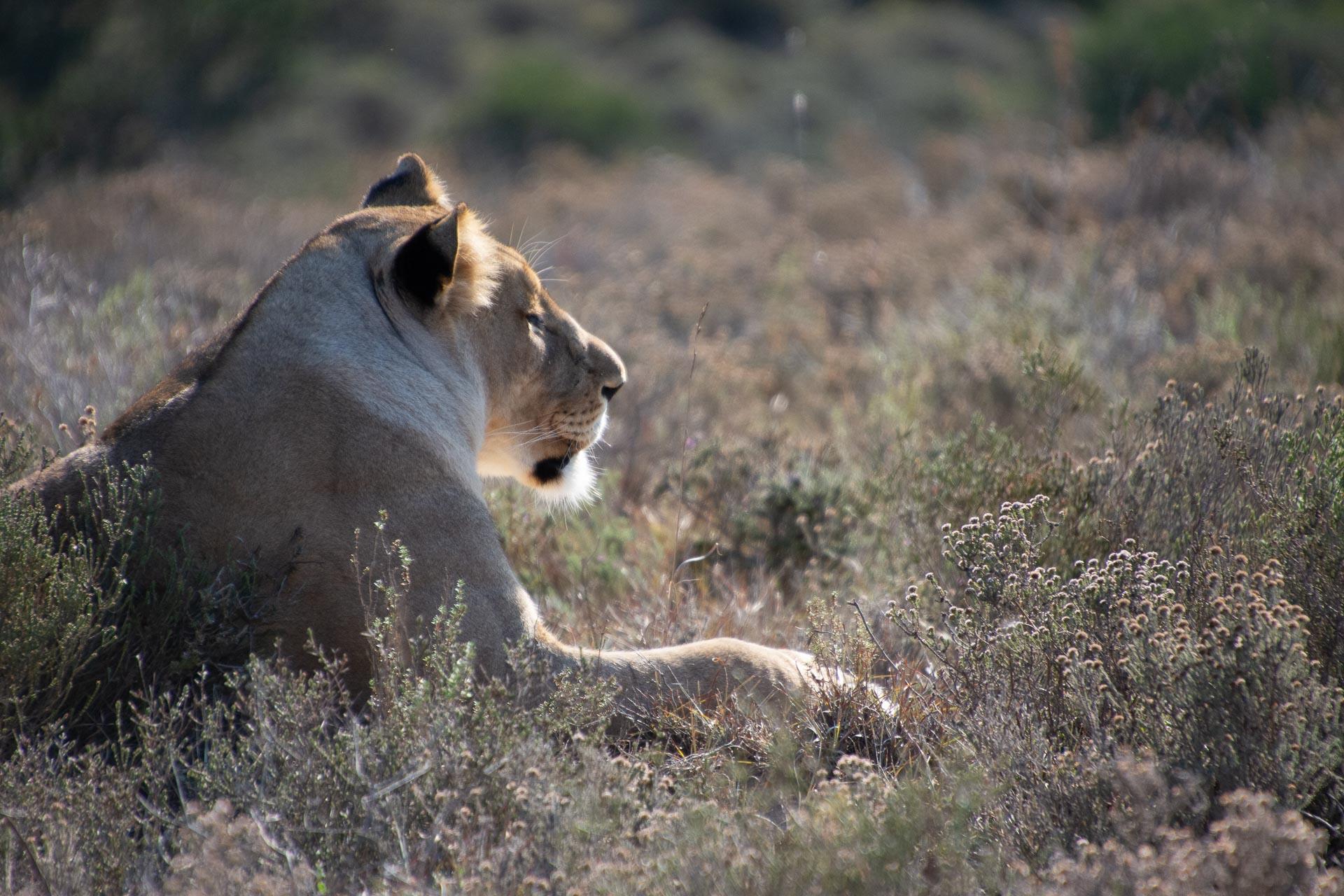 Amakhala-Game-Reserve-Suedafrika-Globetrotter-Select-16
