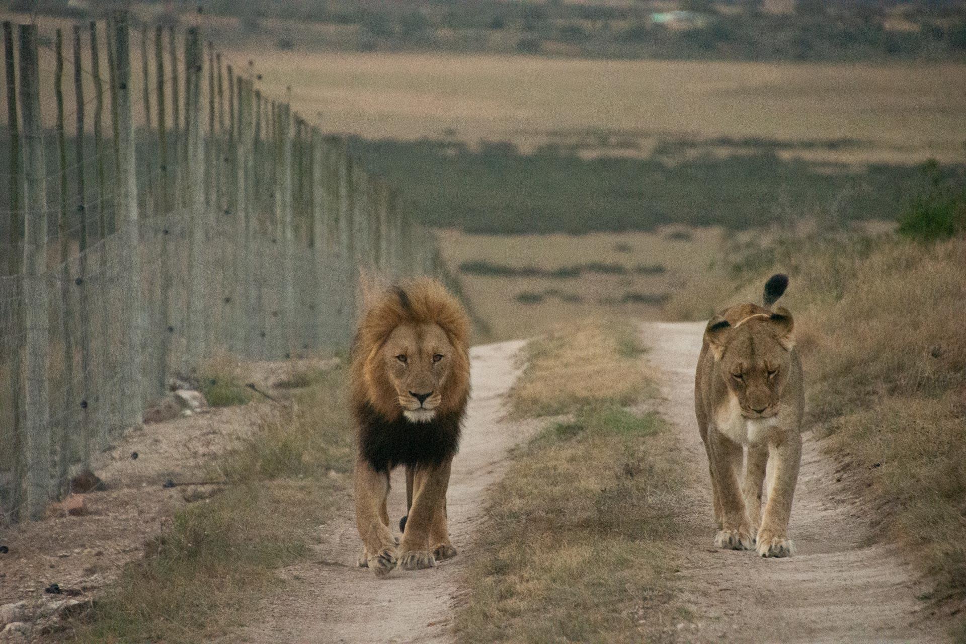 Amakhala-Game-Reserve-Suedafrika-Globetrotter-Select-25