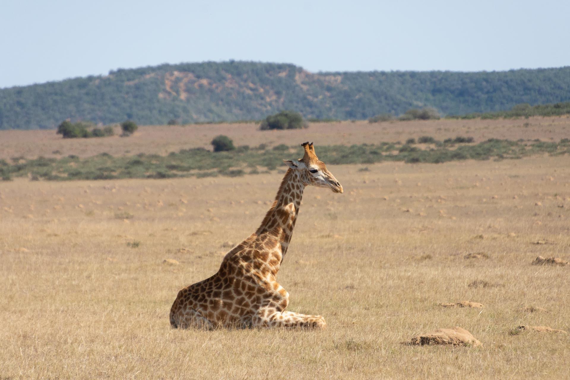 Amakhala-Game-Reserve-Suedafrika-Globetrotter-Select-34
