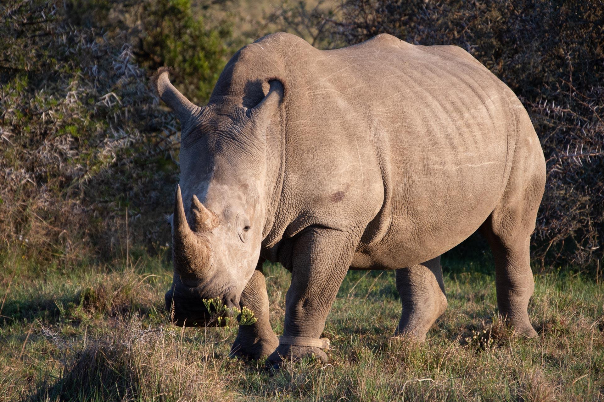 Amakhala-Game-Reserve-Suedafrika-Globetrotter-Select-7