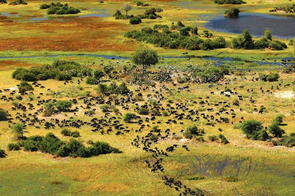 Botswana-Tourism-Board-1
