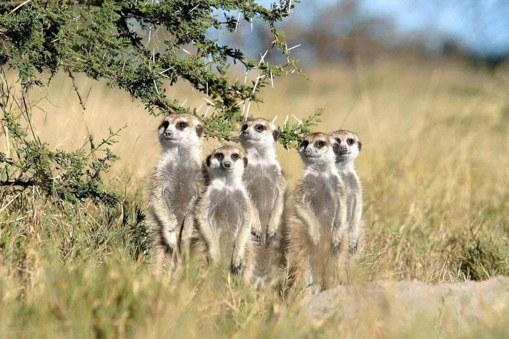 Botswana-Tourism-Board2