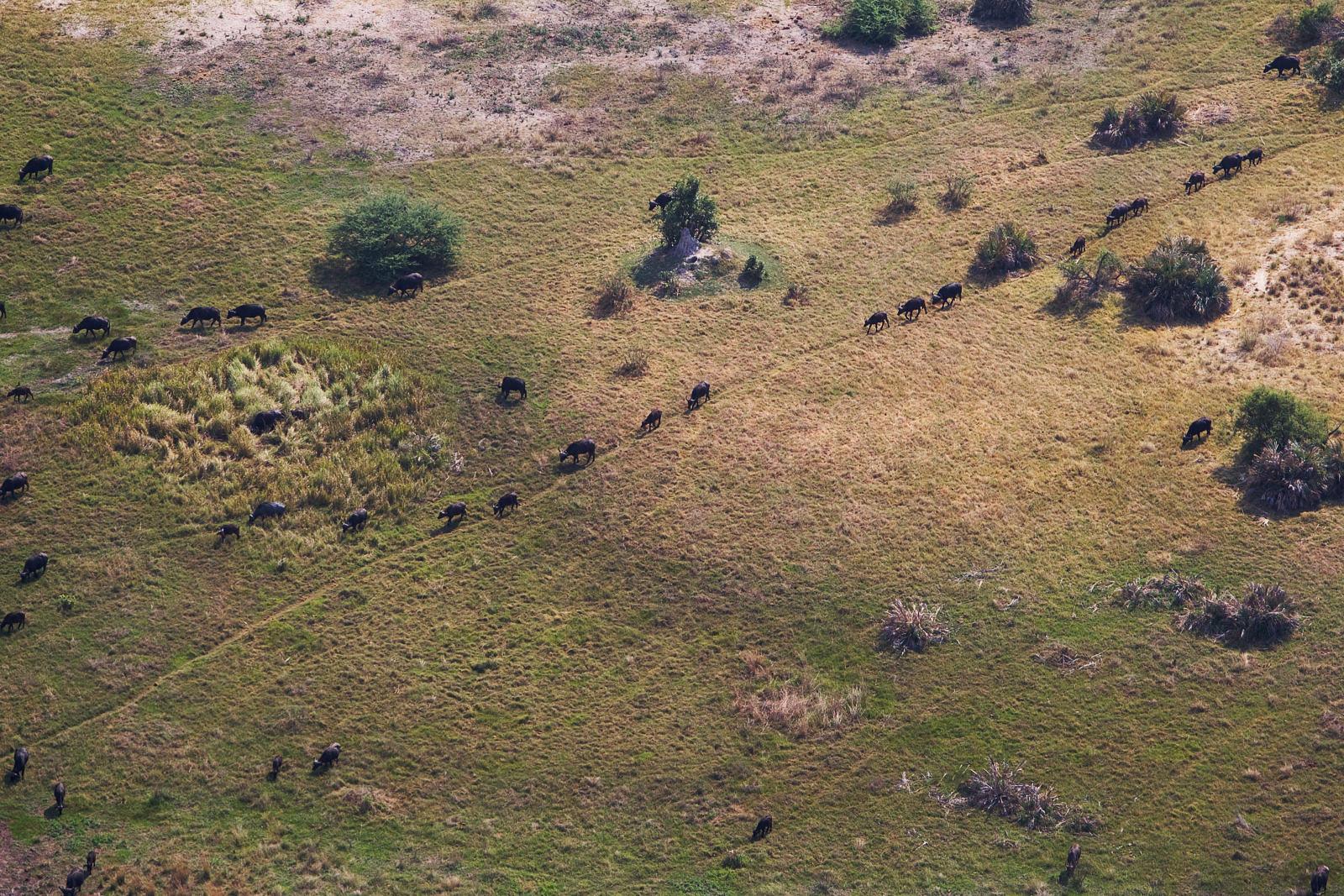 Camp-Okuti-Delta-Botswana-3