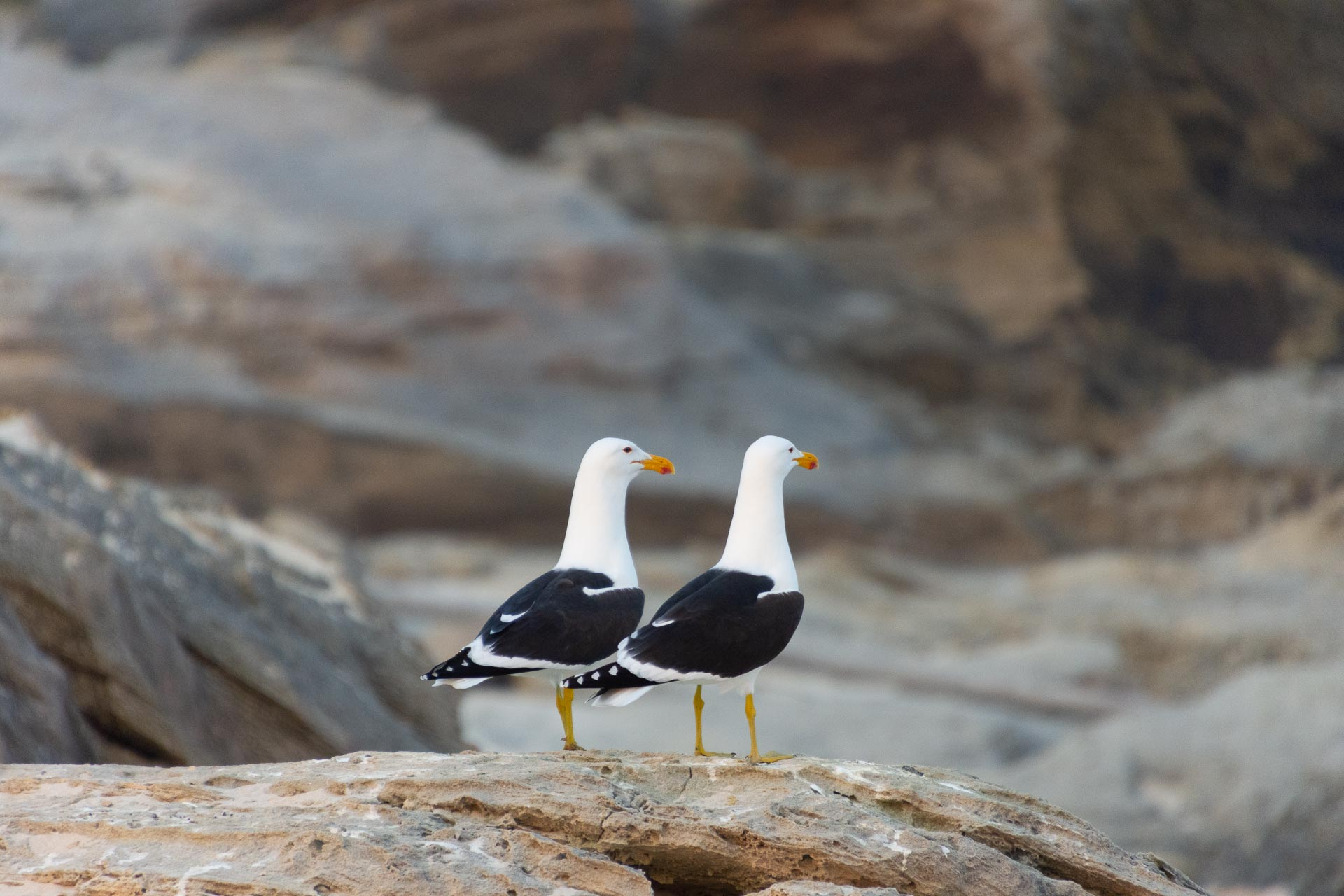 De-Hoop-Nature-Reserve-Suedafrika-Globetrotter-Select-17
