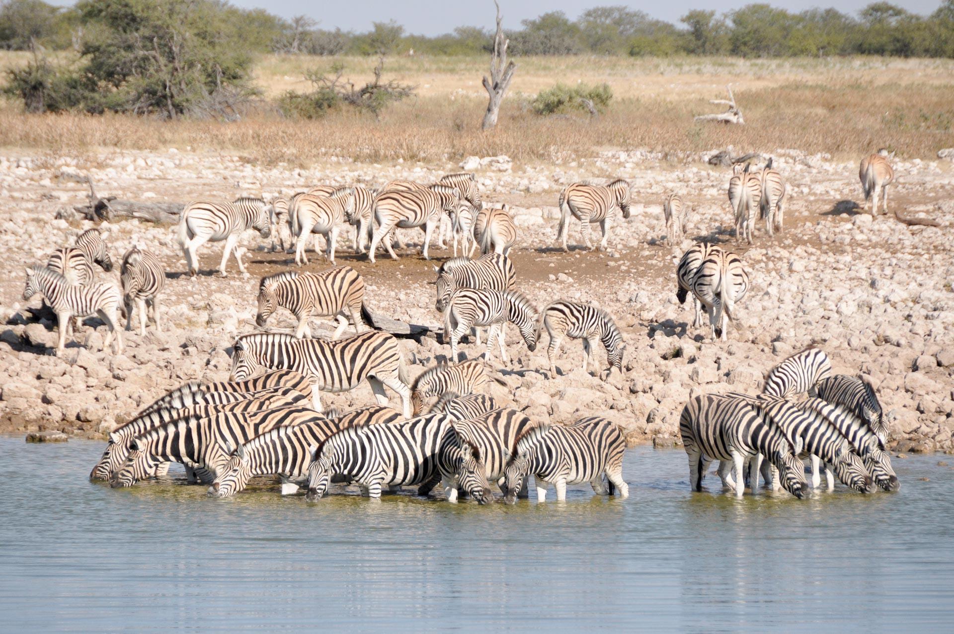 Etosha-Nationalpark-Namibia-Globetrotter-Select-20