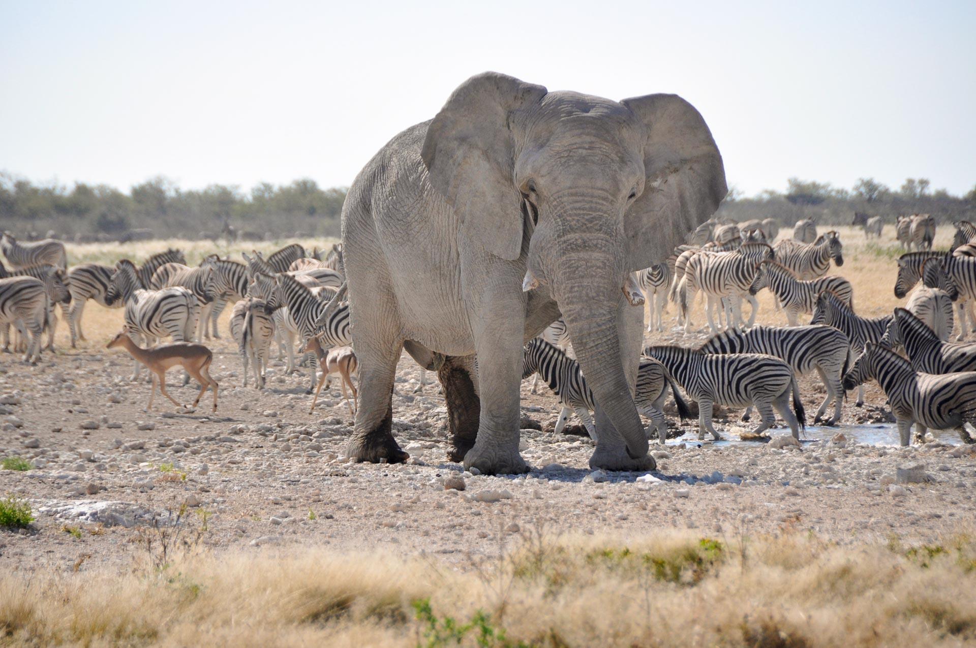 Etosha-Nationalpark-Namibia-Globetrotter-Select-21