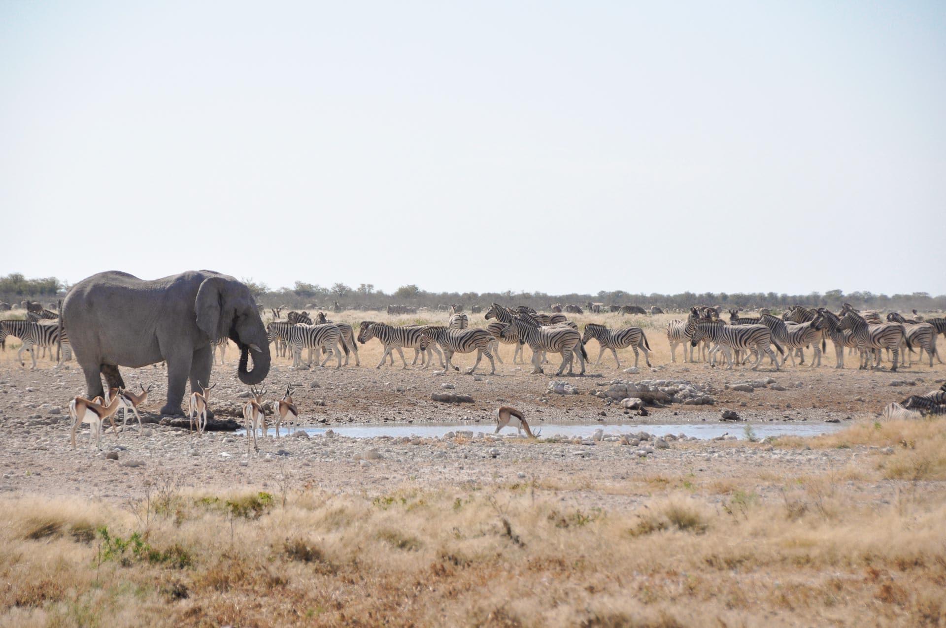 Etosha-Nationalpark-Namibia-Globetrotter-Select-22