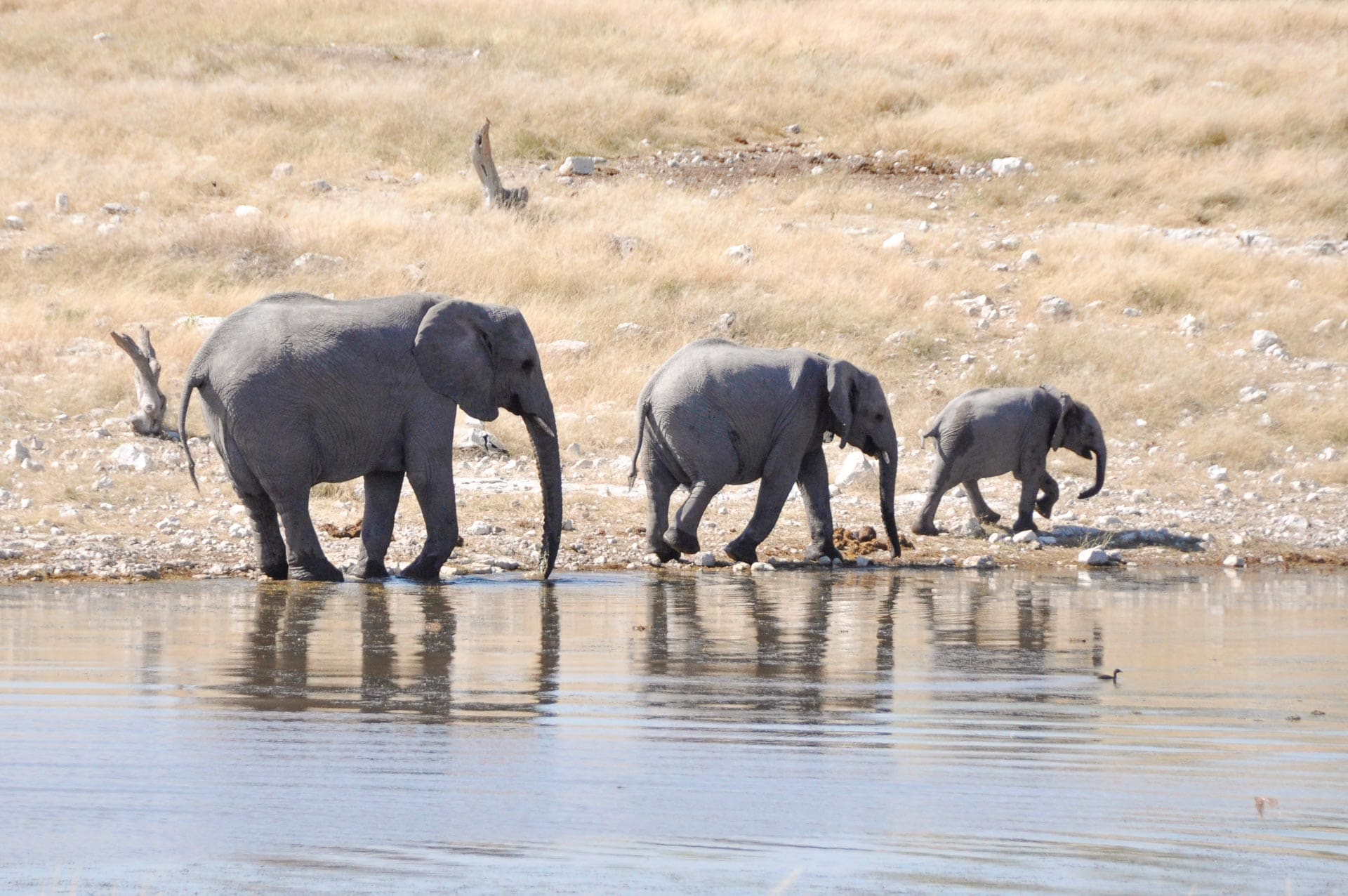 Etosha-Nationalpark-Namibia-Globetrotter-Select-25
