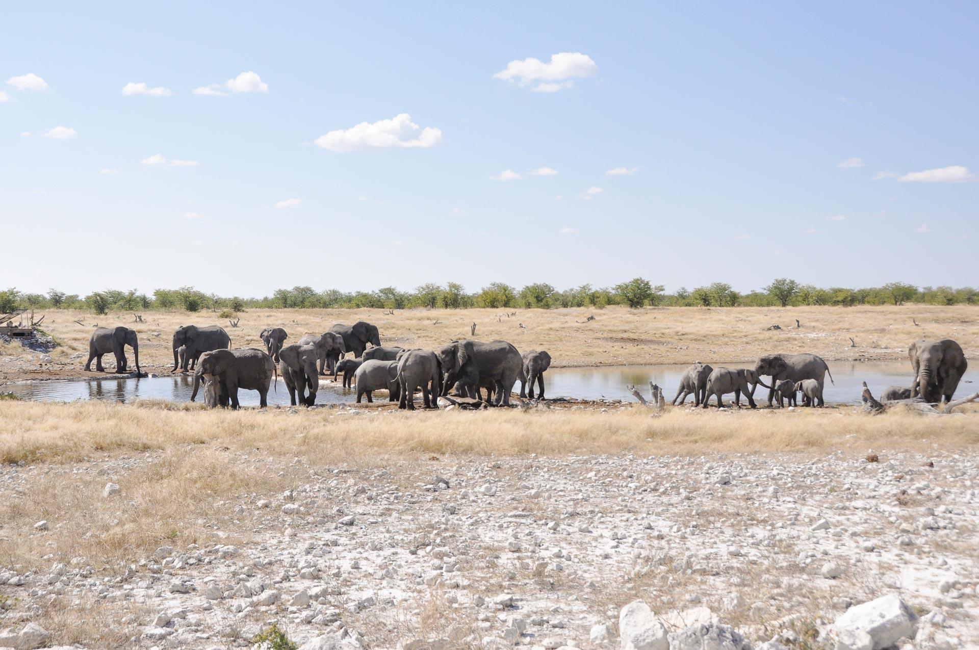 Etosha-Nationalpark-Namibia-Globetrotter-Select-27