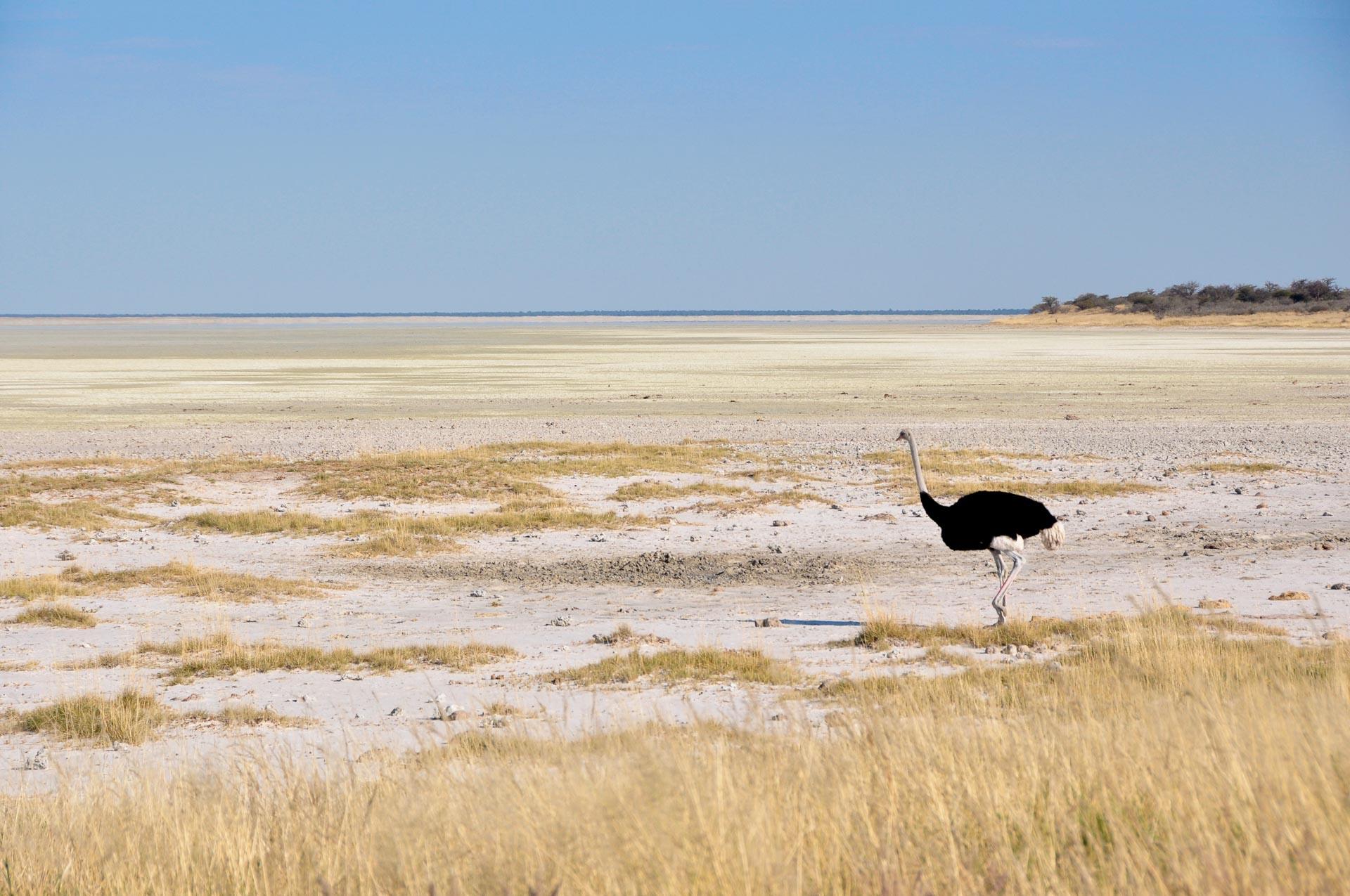 Etosha-Nationalpark-Namibia-Globetrotter-Select-3