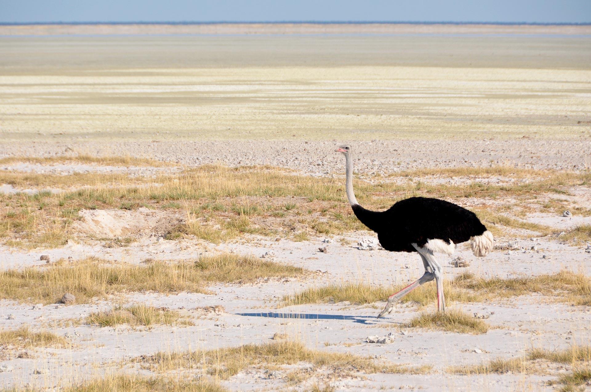 Etosha-Nationalpark-Namibia-Globetrotter-Select-4