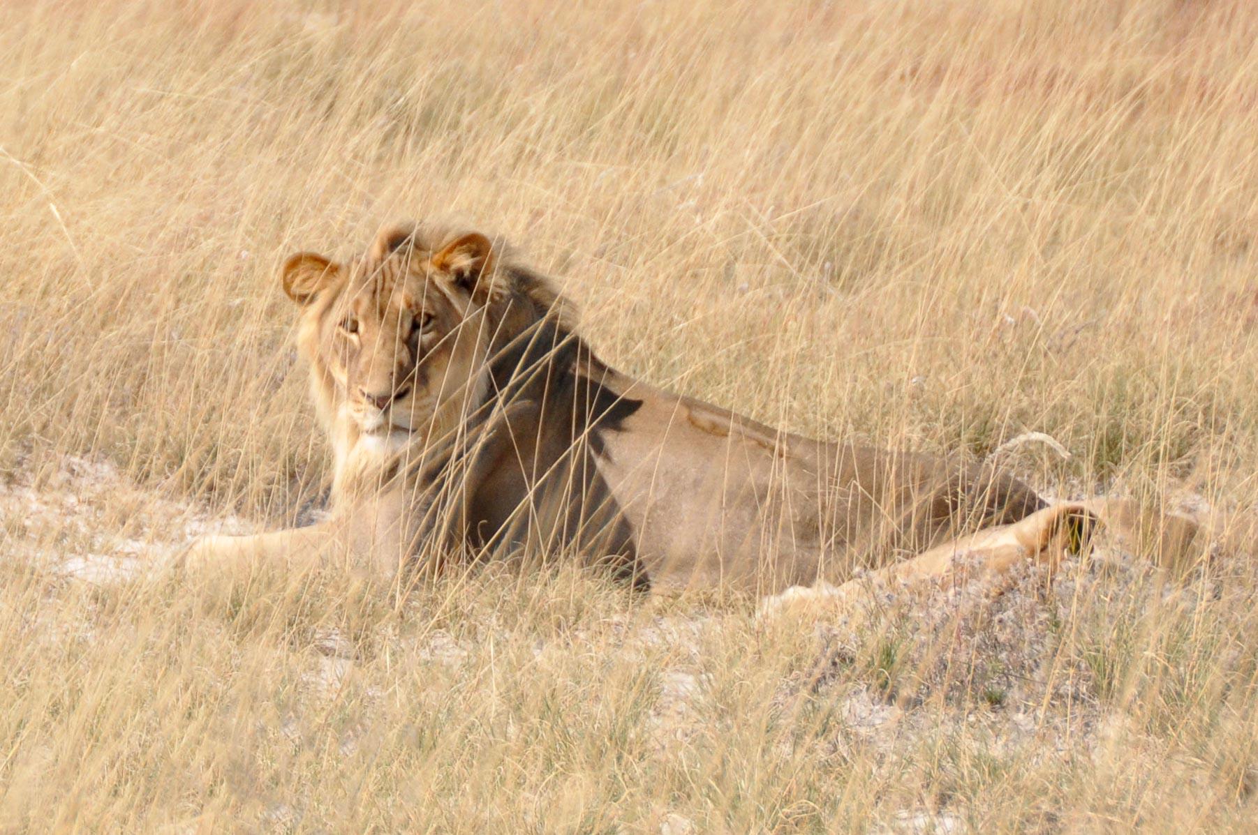 Etosha-Nationalpark-Namibia-Globetrotter-Select-6