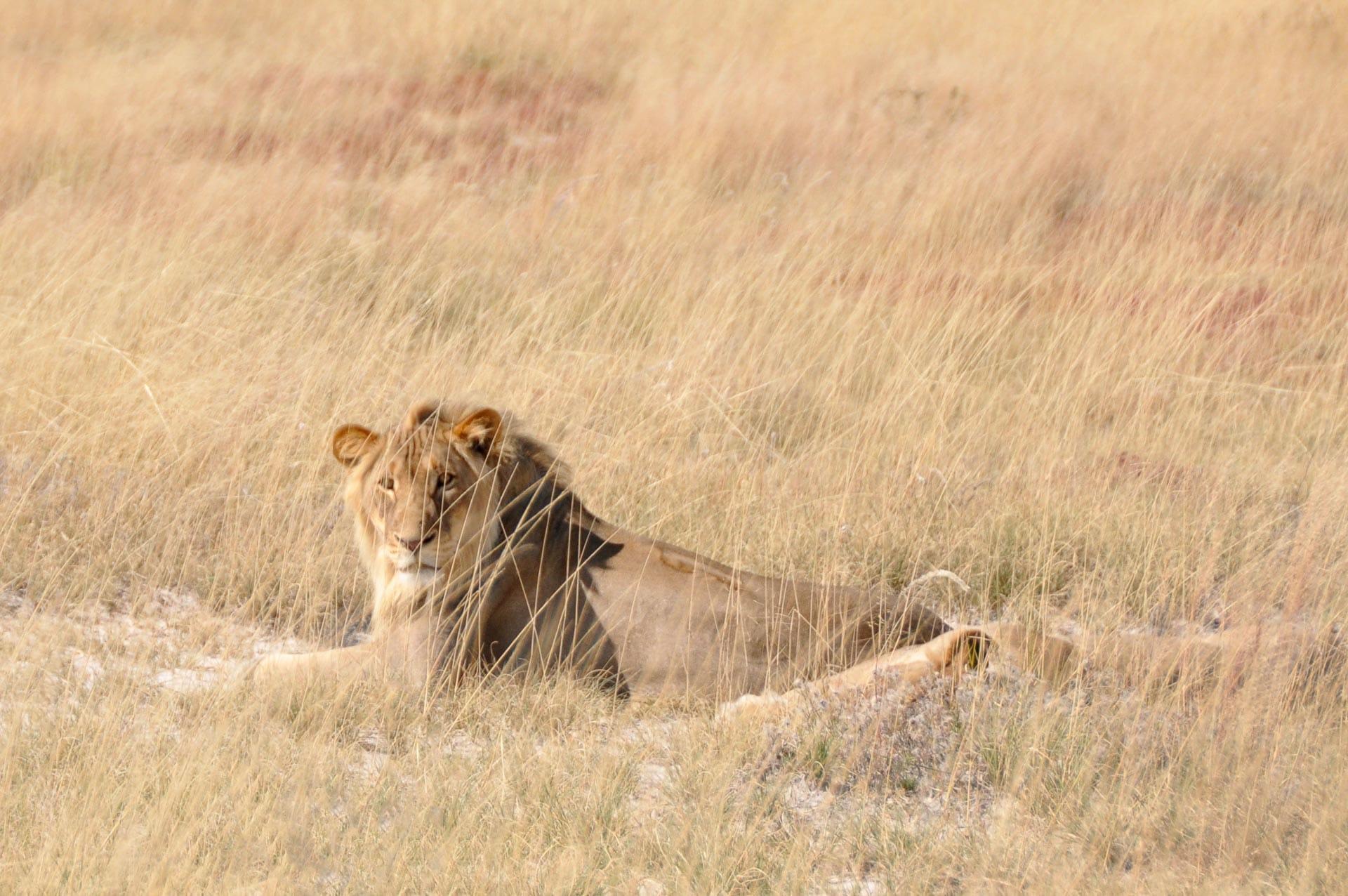 Etosha-Nationalpark-Namibia-Globetrotter-Select-7