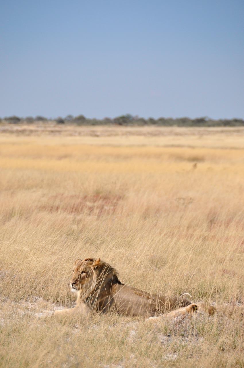Etosha-Nationalpark-Namibia-Globetrotter-Select-8
