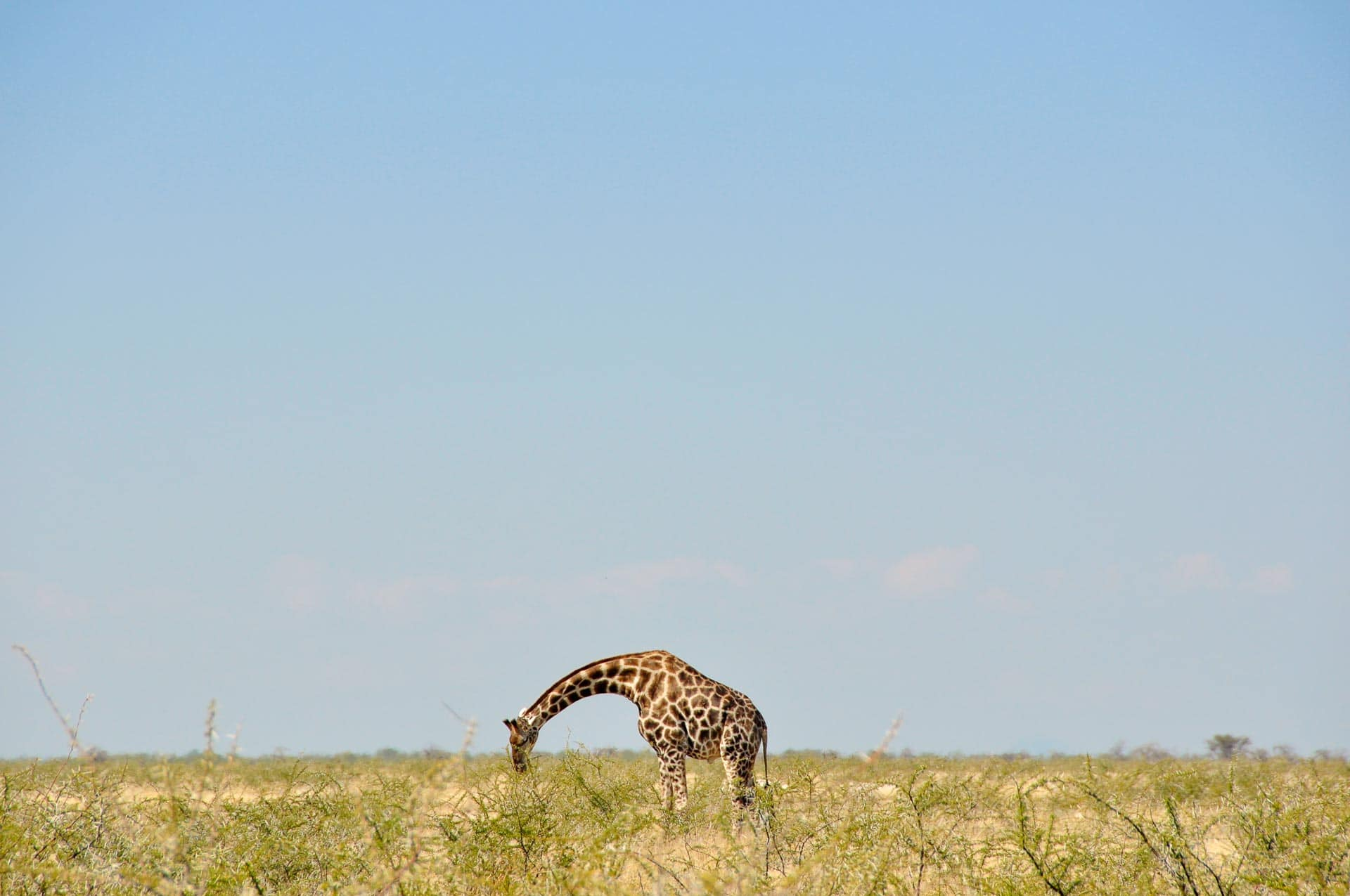 Etosha-Nationalpark-Namibia-Globetrotter-Select-9