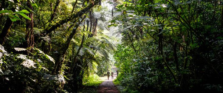 Gorilla-Forest-Camp-Sanctuary-Retreats-14-von-14