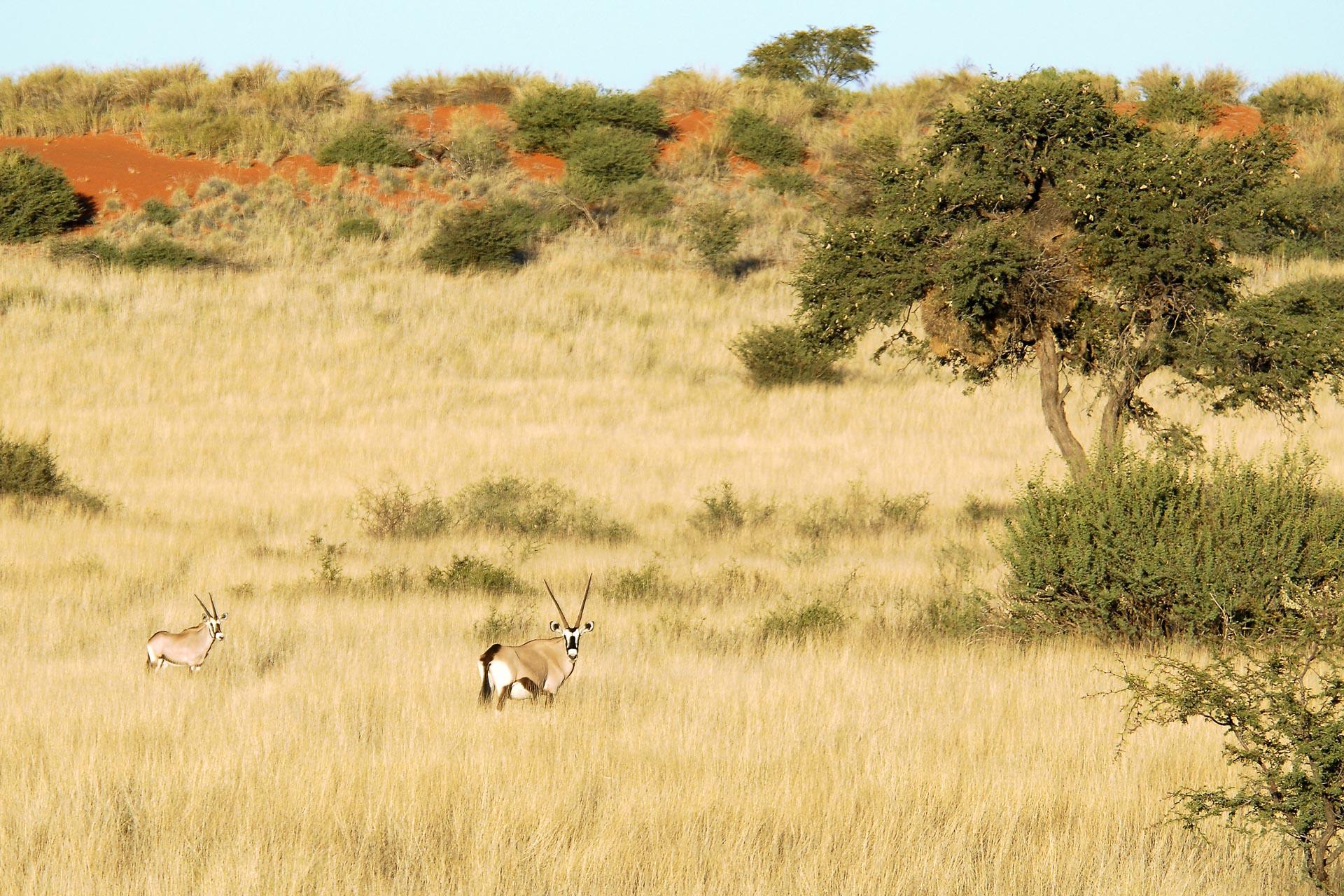 Kalahari-Anib-Lodge-1