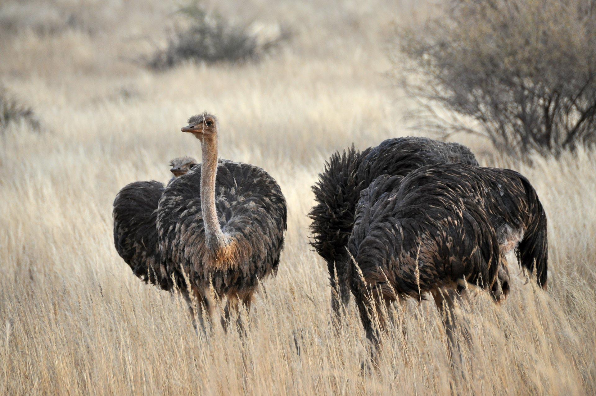 Kalahari-Namibia-Globetrotter-Select-2