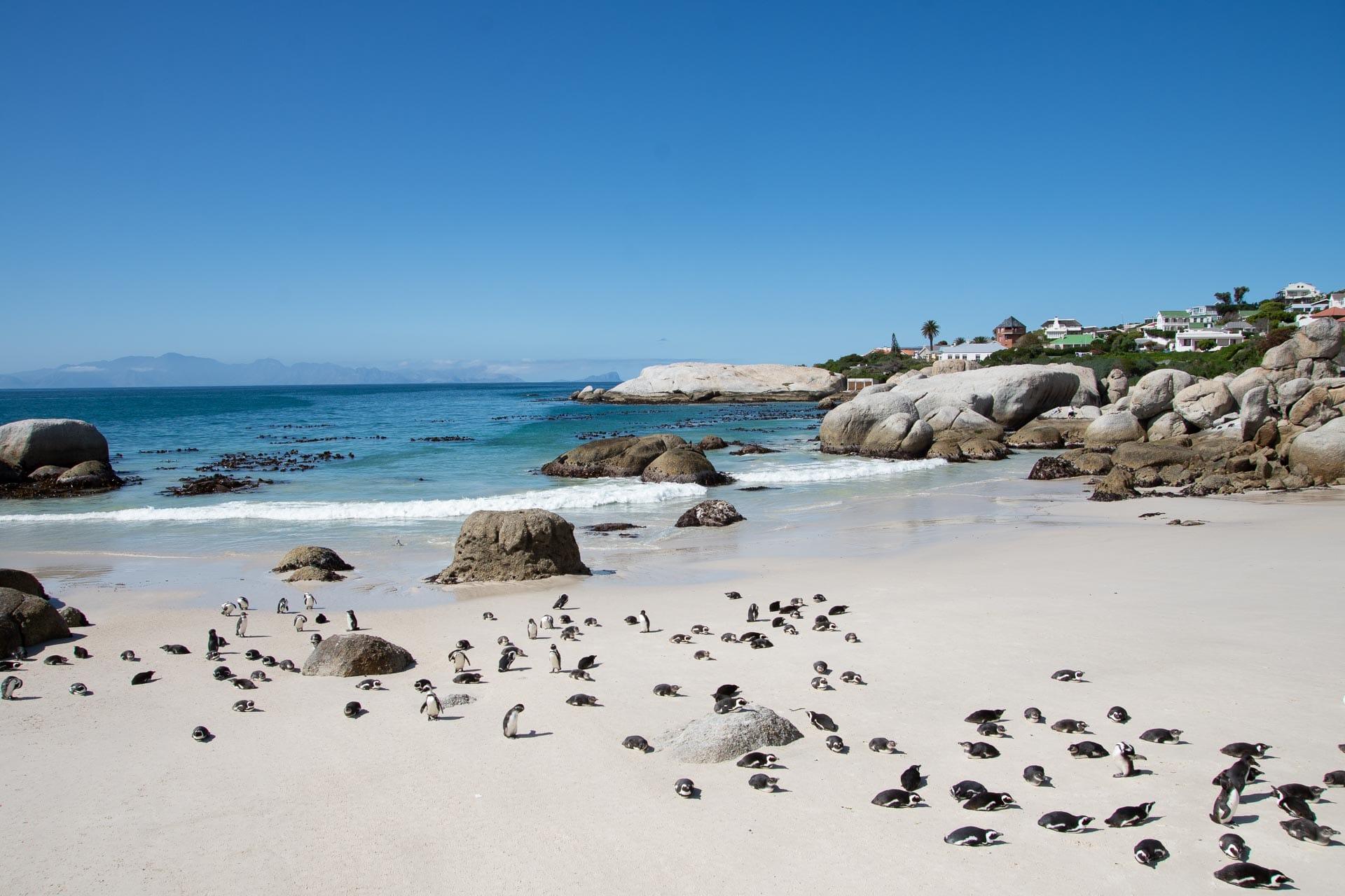 Kapstadt-Suedafrika-Globetrotter-Select-1041