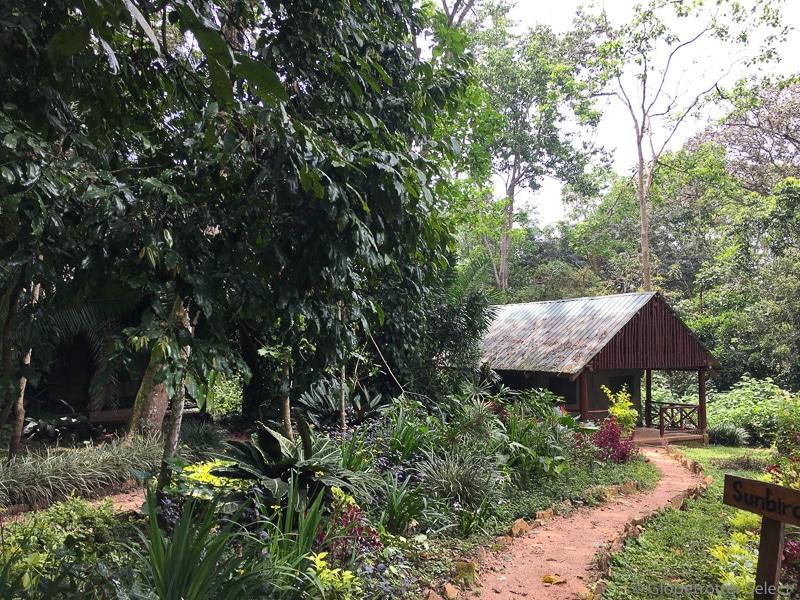 Kibale-Forest-Camp-Gloetrotter-Select2