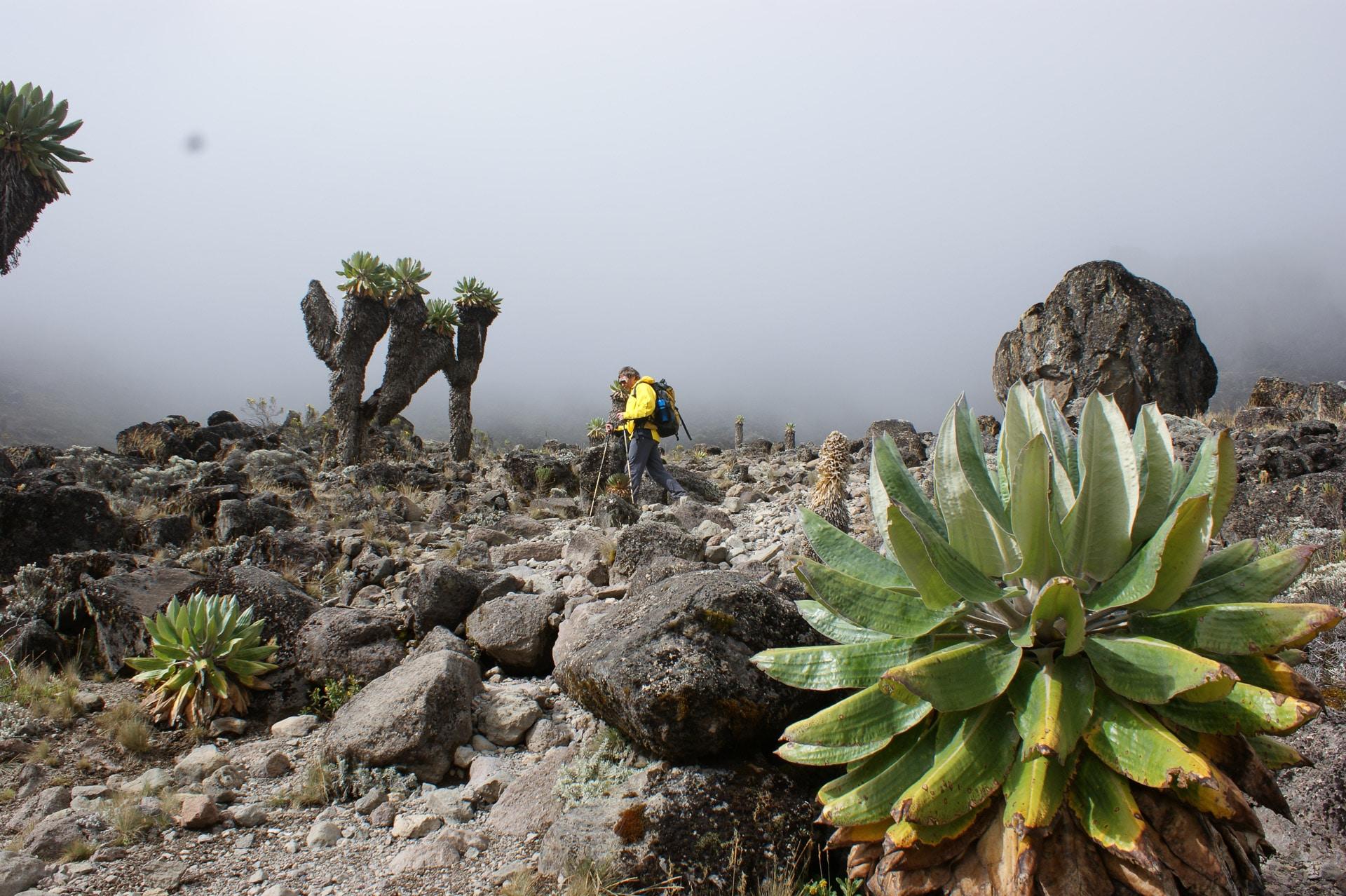 Kilimanjaro-Tansania-Globetrotter-Select-Krause-06