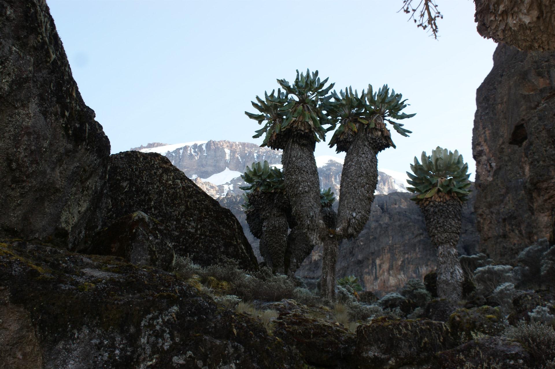 Kilimanjaro-Tansania-Globetrotter-Select-Krause-08