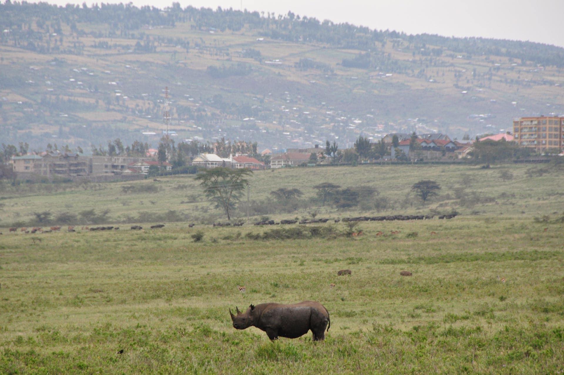 Lake-Nakuru-Nationalpark-Kenia-Globetrotter-Select-1