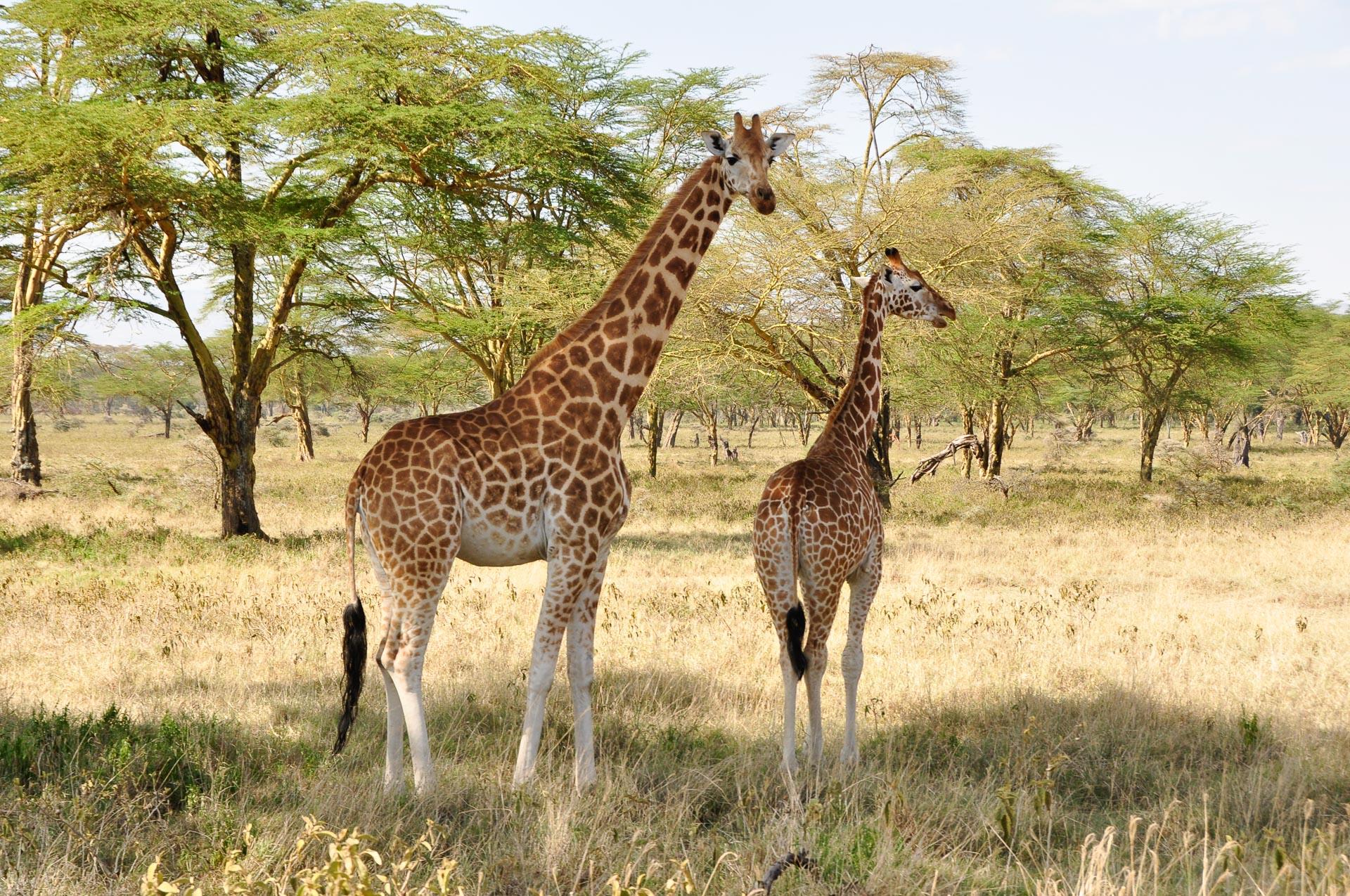 Lake-Nakuru-Nationalpark-Kenia-Globetrotter-Select-11