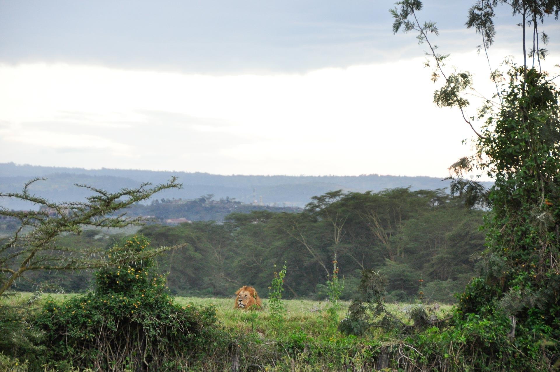 Lake-Nakuru-Nationalpark-Kenia-Globetrotter-Select-2