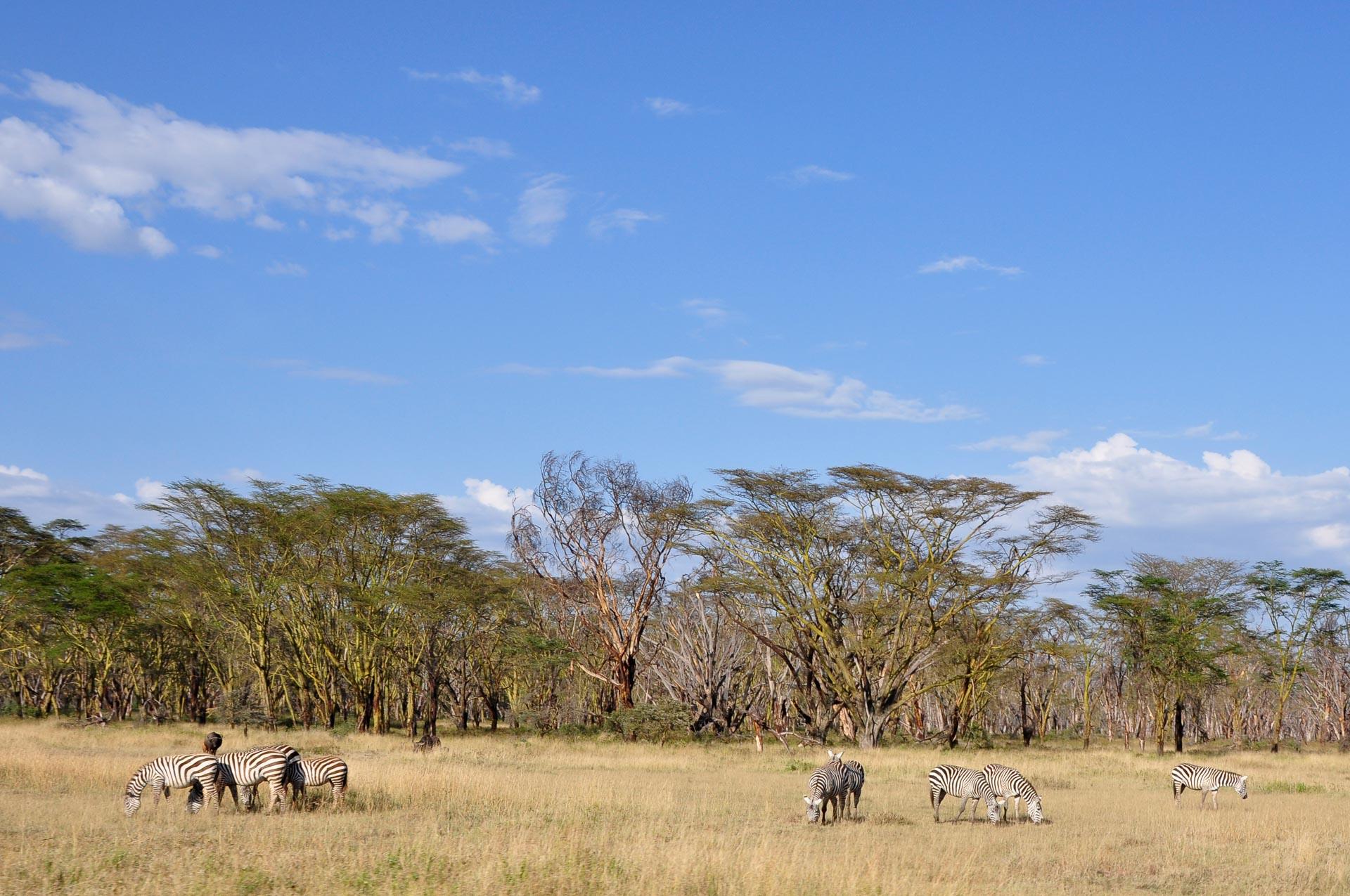 Lake-Nakuru-Nationalpark-Kenia-Globetrotter-Select-5