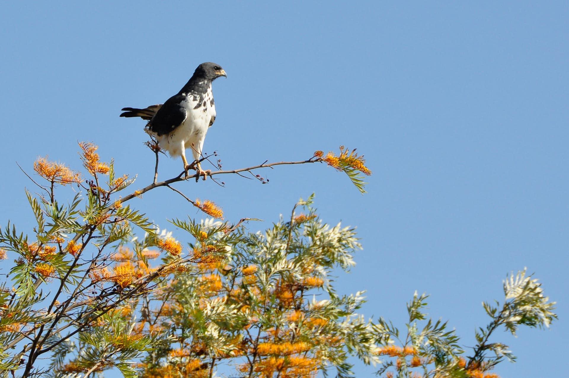 Lake-Nakuru-Nationalpark-Kenia-Globetrotter-Select-6