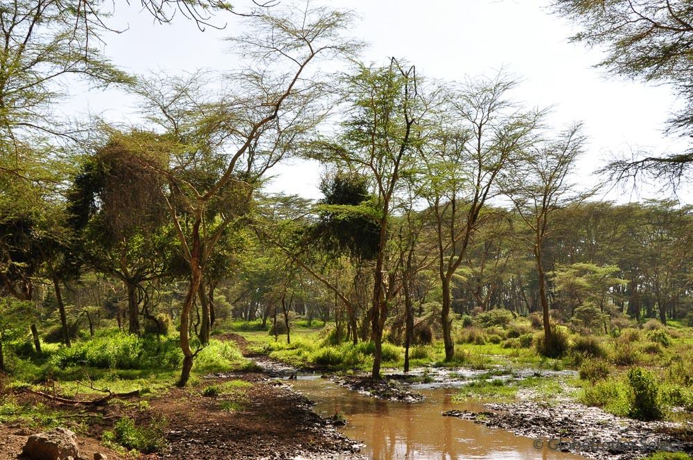Lake-Nakuru-Nationalpark-Kenia-Globetrotter-Select-7