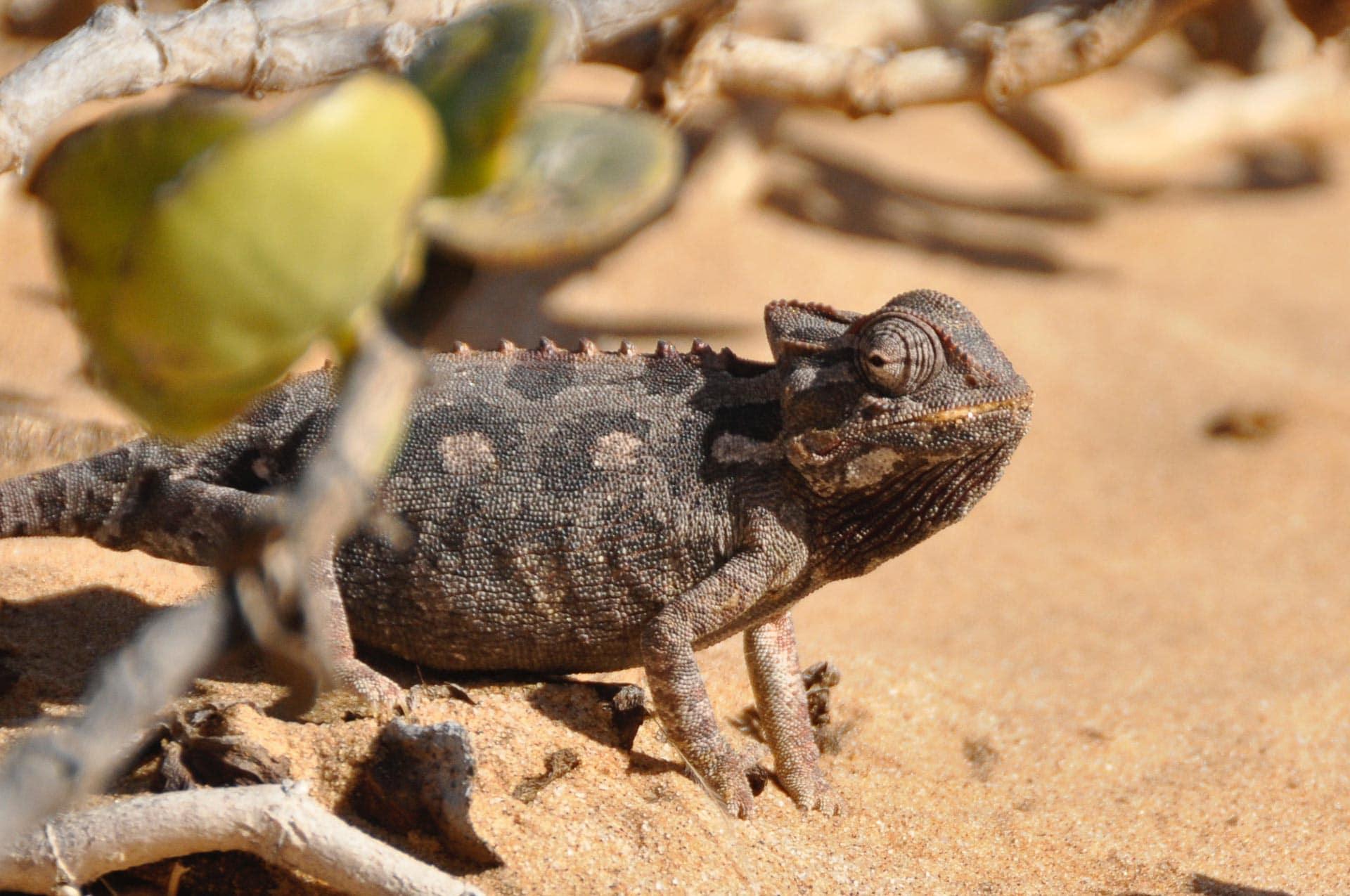 Living-Desert-Tour-Swakopmund-Namibia-Globetrotter-Select-11