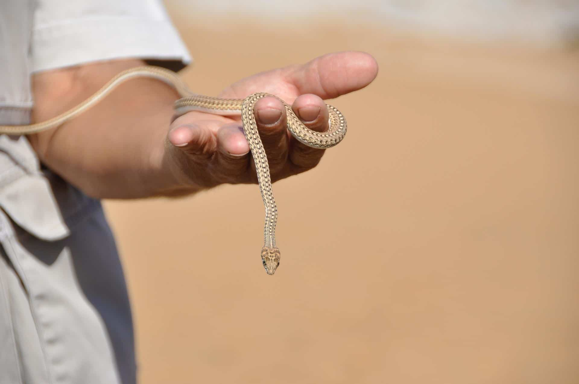 Living-Desert-Tour-Swakopmund-Namibia-Globetrotter-Select-14