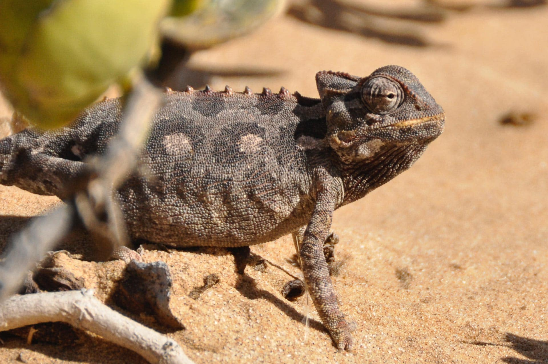 Living-Desert-Tour-Swakopmund-Namibia-Globetrotter-Select-6