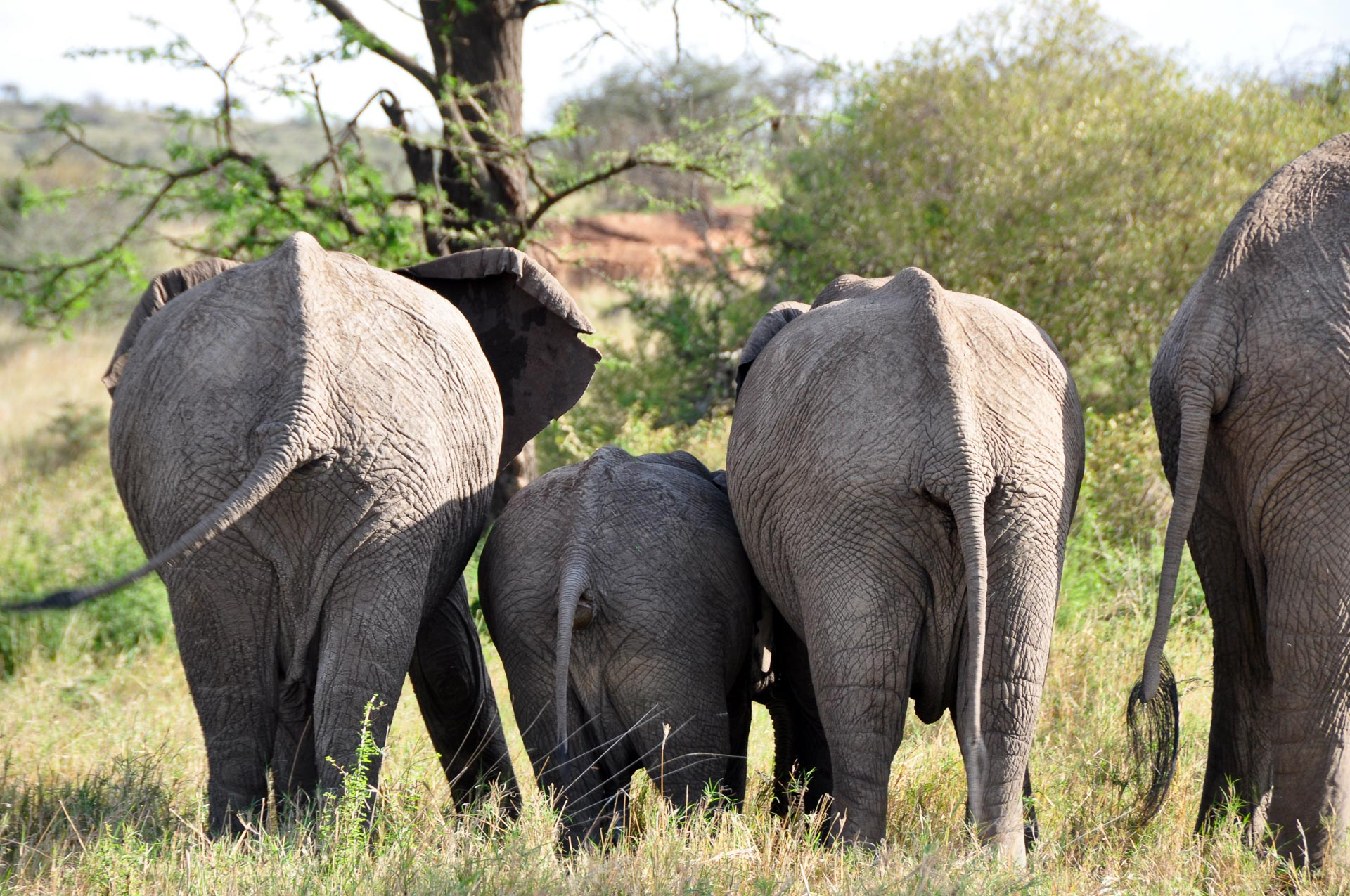 Masai-Mara-Kenia-Globetrotter-Select-1