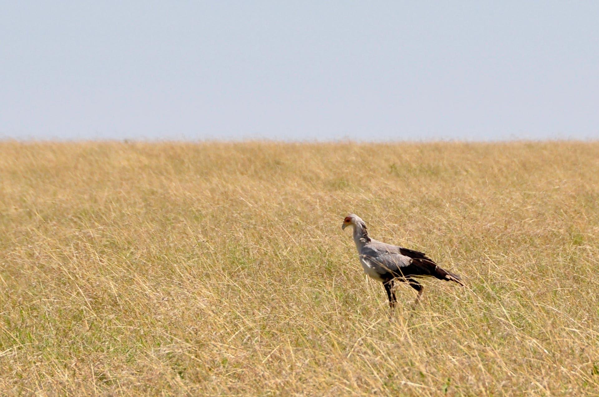 Masai-Mara-Kenia-Globetrotter-Select-10
