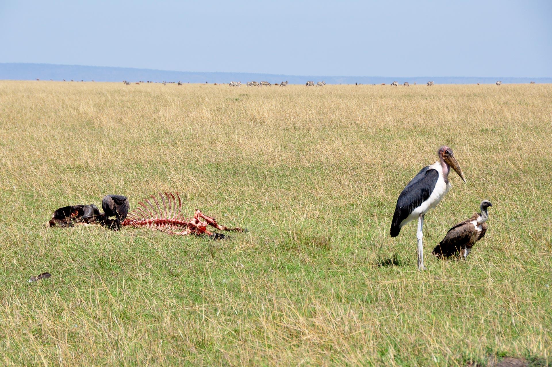 Masai-Mara-Kenia-Globetrotter-Select-12