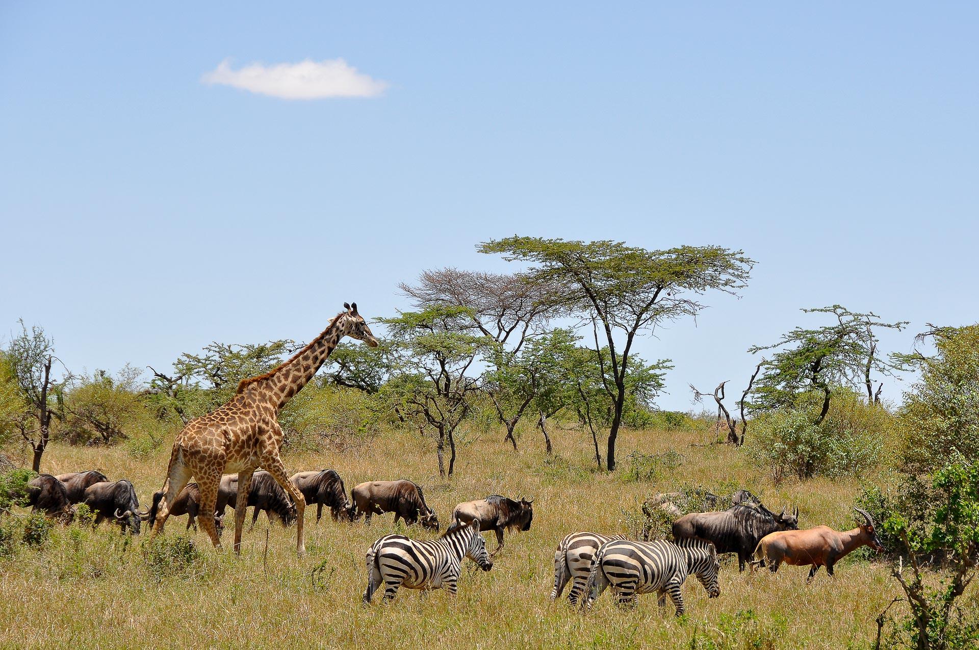 Masai-Mara-Kenia-Globetrotter-Select-13