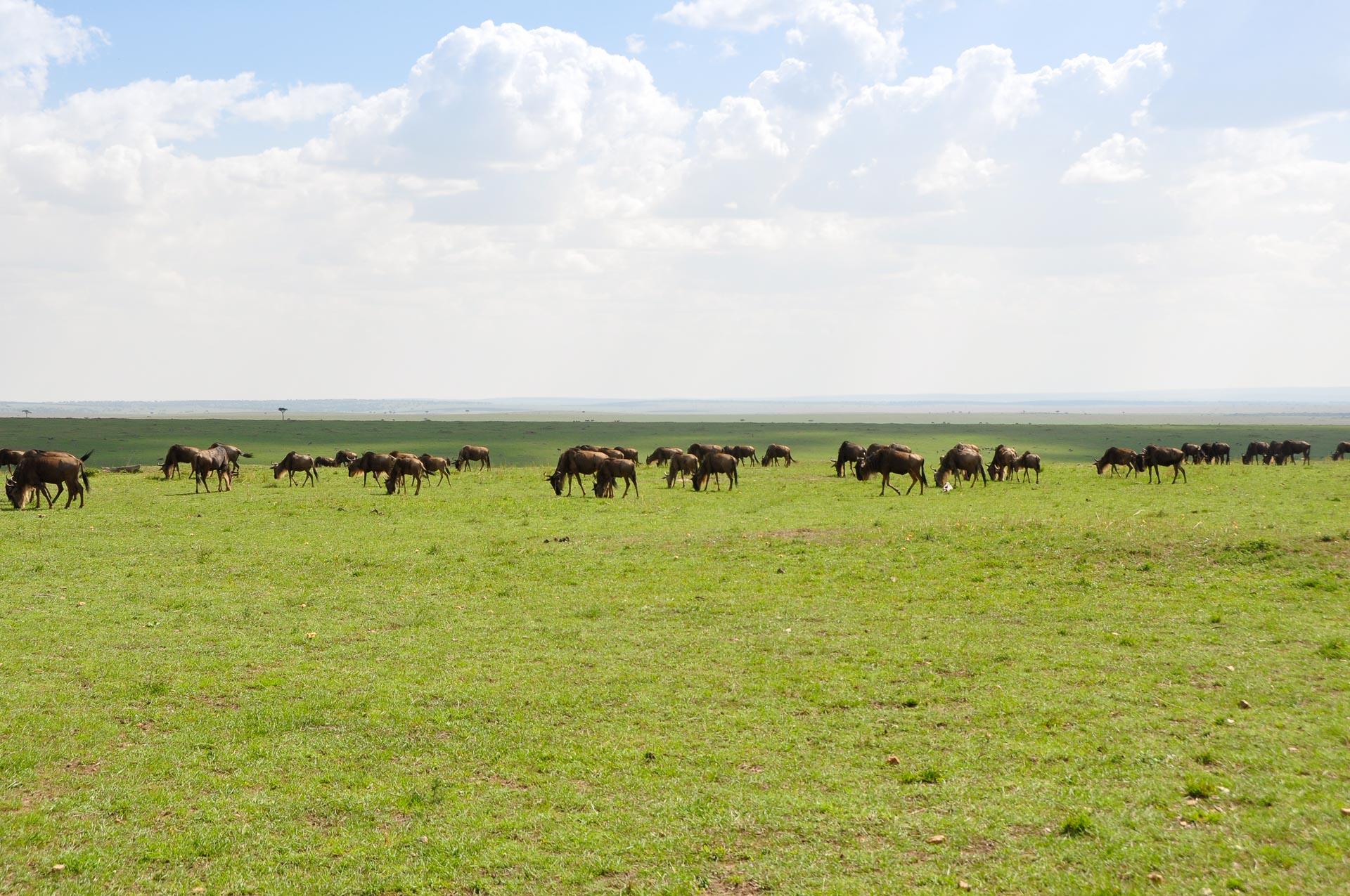 Masai-Mara-Kenia-Globetrotter-Select-17
