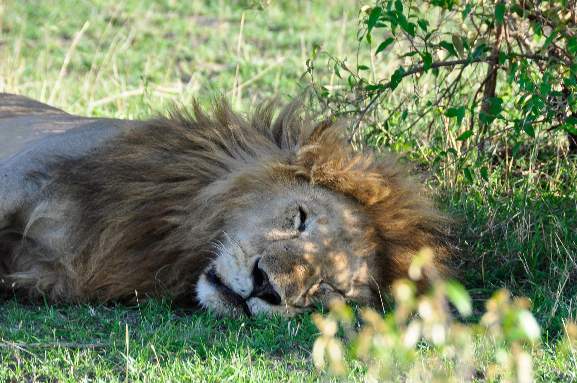 Masai-Mara-Kenia-Globetrotter-Select-2
