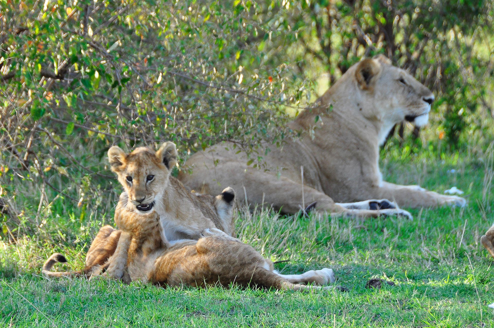 Masai-Mara-Kenia-Globetrotter-Select-3
