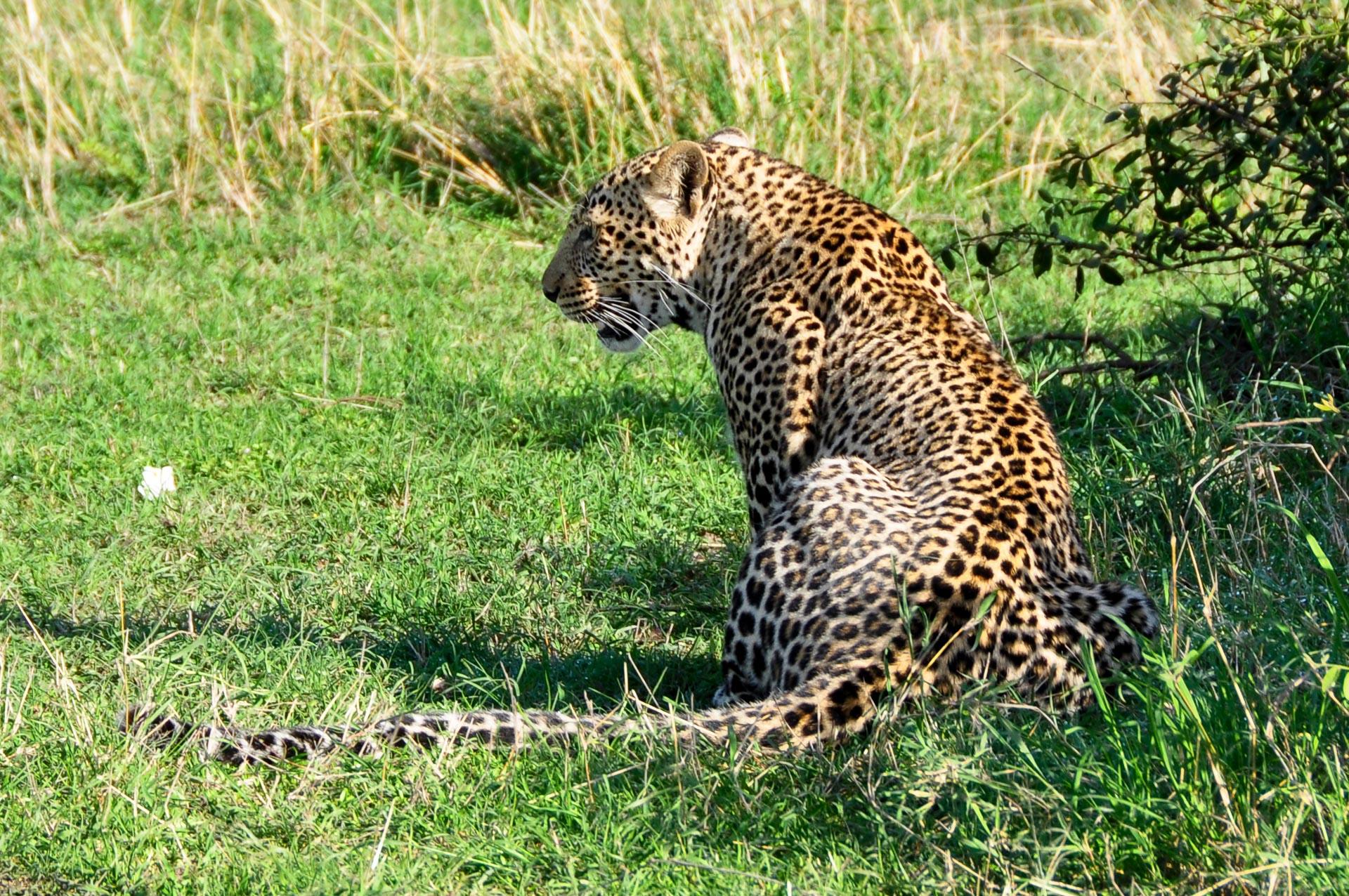 Masai-Mara-Kenia-Globetrotter-Select-5
