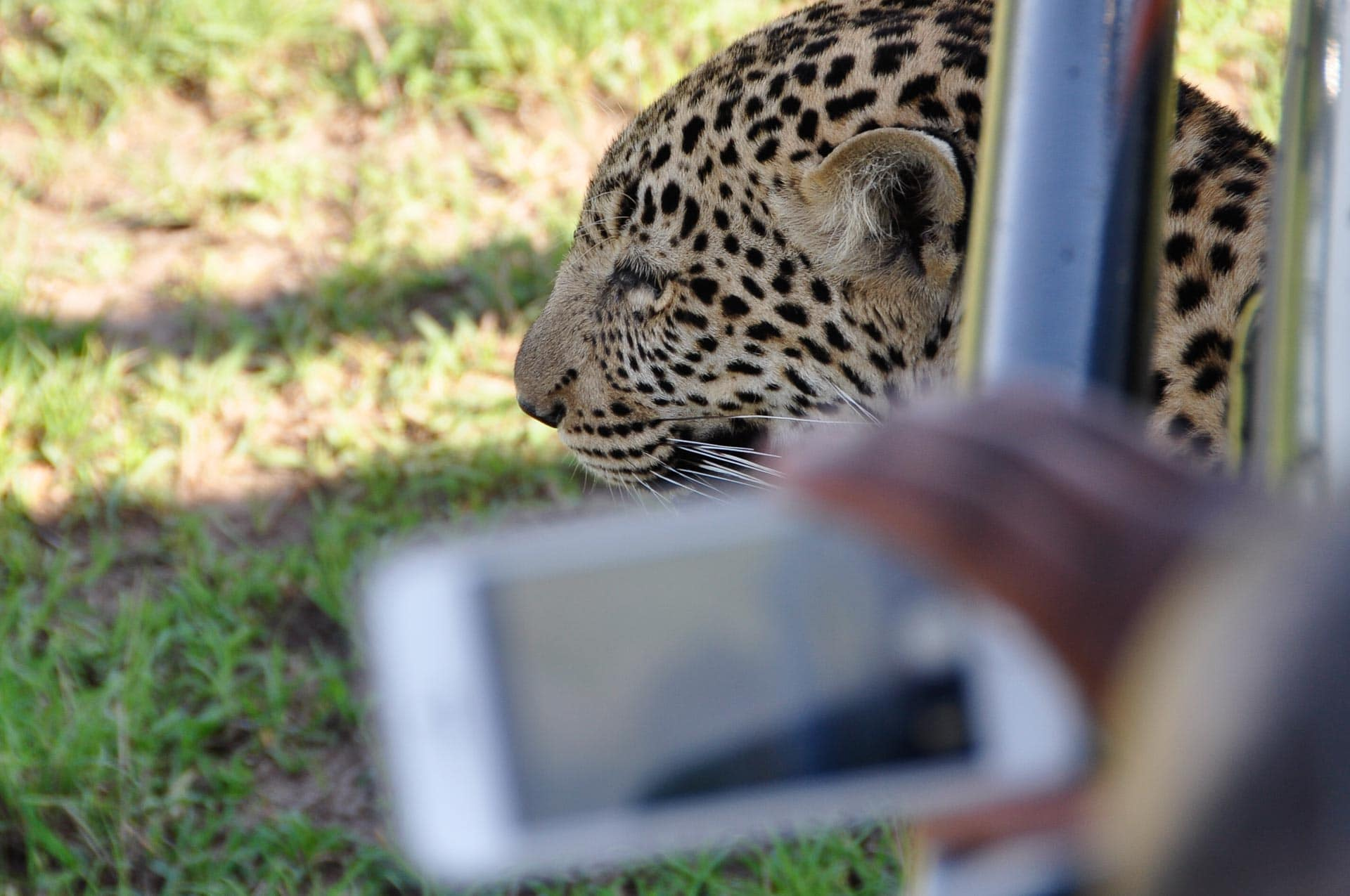 Masai-Mara-Kenia-Globetrotter-Select-9