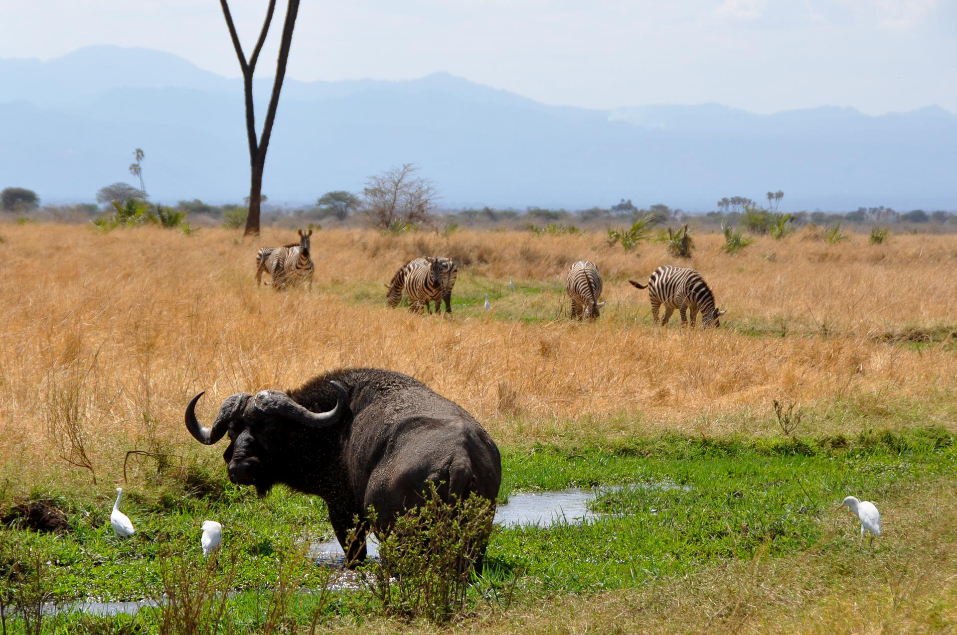 Meru-Nationalpark-Kenia-Globetrotter-Select-2