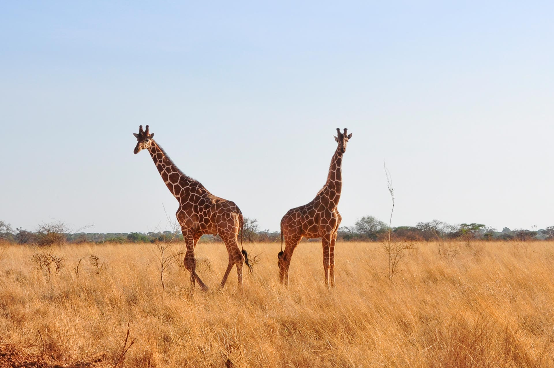 Meru-Nationalpark-Kenia-Globetrotter-Select-6