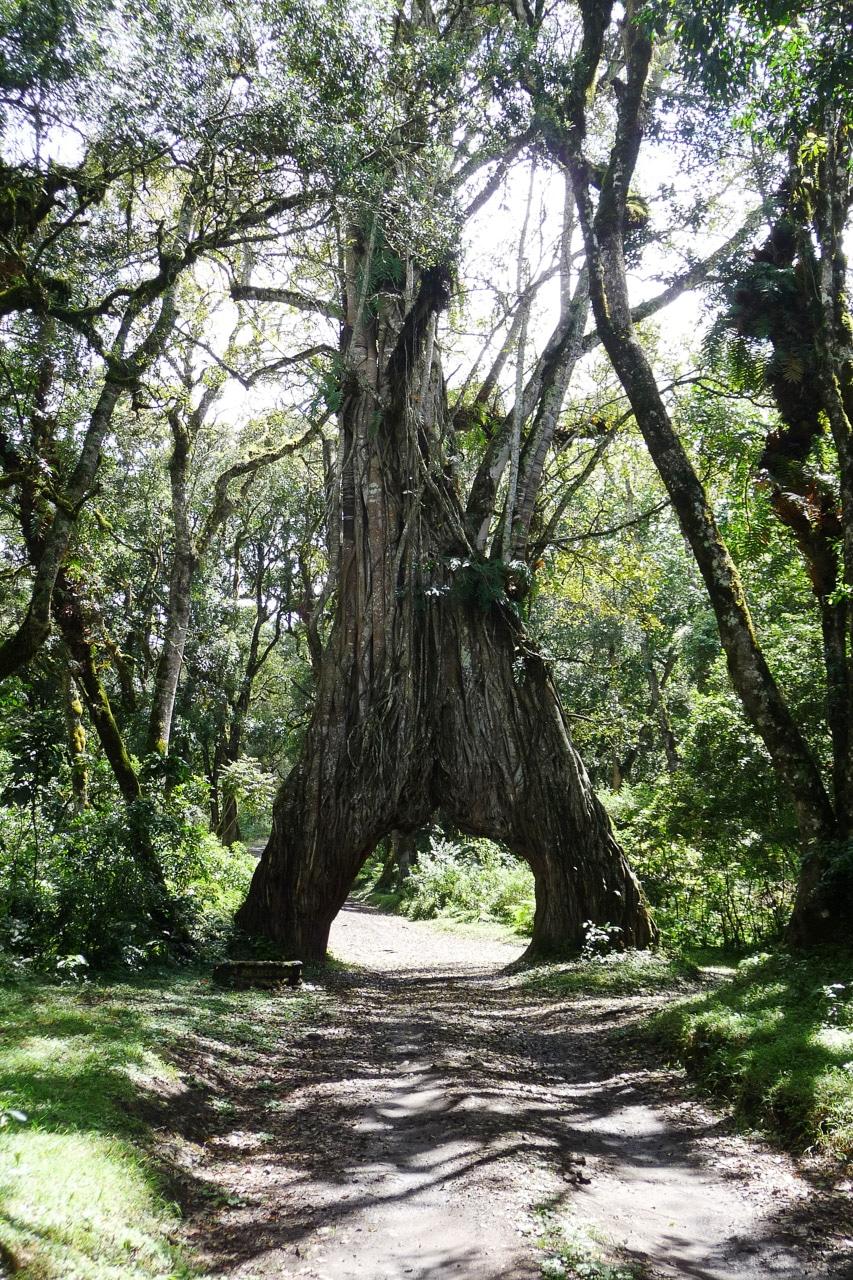 Mount-Meru-Arusha-Nationalpark-Tansania-Globetrotter-Select-Boehm-3