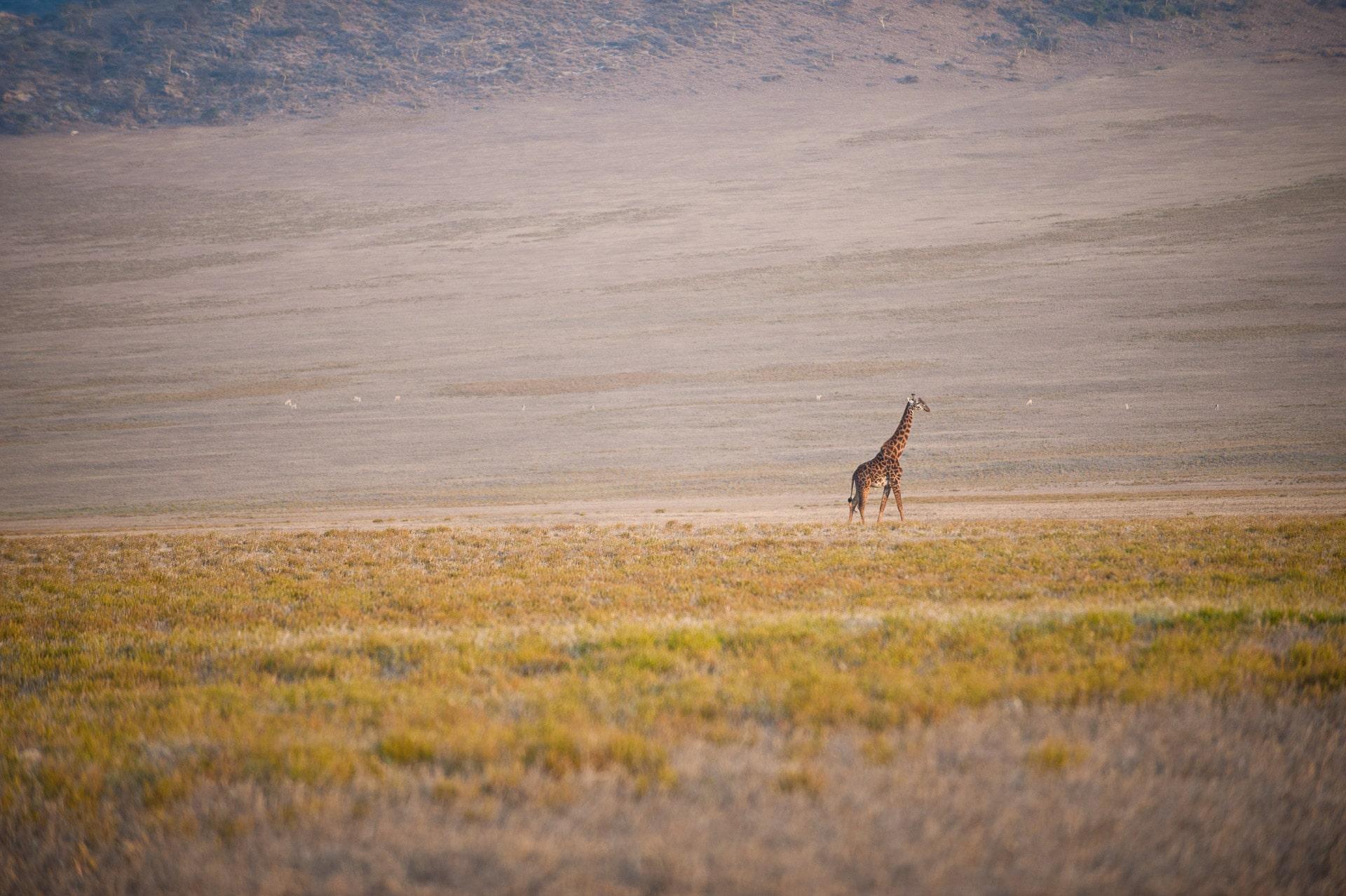 Ngorongoro-Conservation-Tansania-Globetrotter-Select-GLenz-55