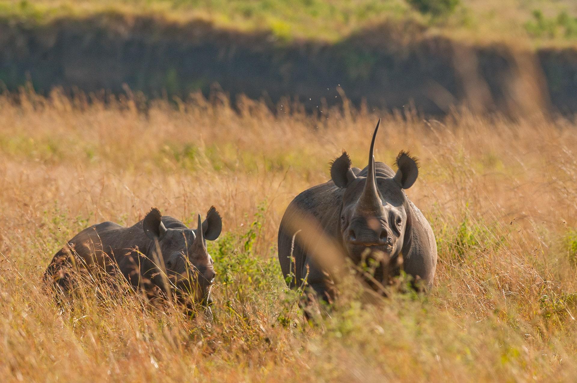 Ngorongoro-Krater-Tansania-Globetrotter-Select-GLenz-51